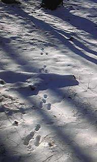 うさぎの足跡.jpg