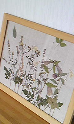 山野草 押し花2.jpg