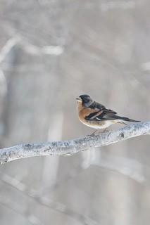 野鳥13.jpg