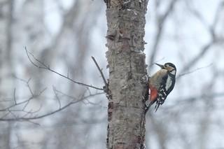 野鳥15.jpg
