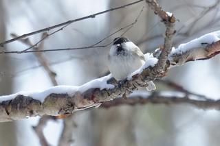 野鳥8.jpg