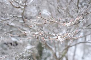 winter31.jpg
